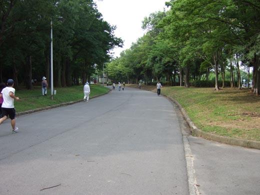 大泉緑地 周回道路